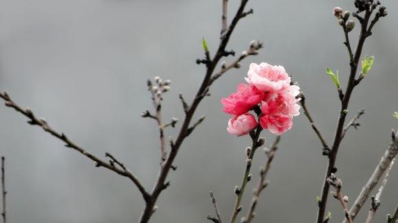flower-2514727_960_720